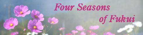 Four Season of Fukui